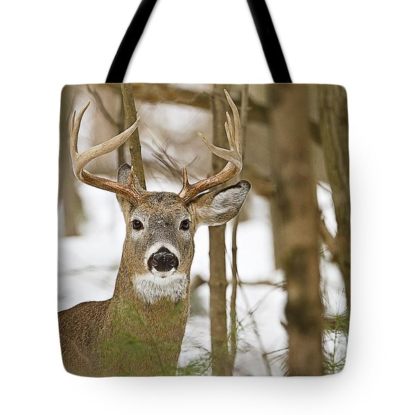 Nine Point White Tailed Buck Tote Bag by John Vose