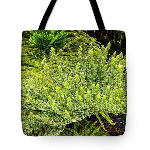 Norfolk  Island  Pine In California Tote Bag by Bob and Nadine Johnston
