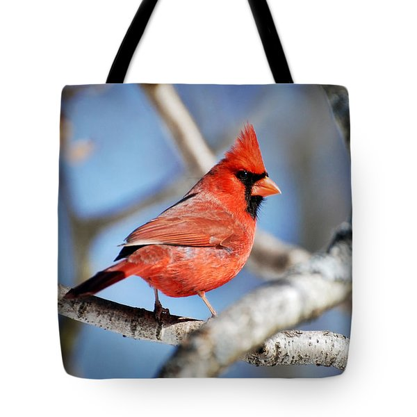 Tote Bag featuring the photograph Northern Cardinal Scarlet Blaze by Christina Rollo