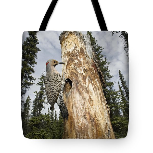 Northern Flicker At Nest Cavity Tote Bag