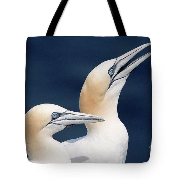 Northern Gannets Newfoundland Tote Bag