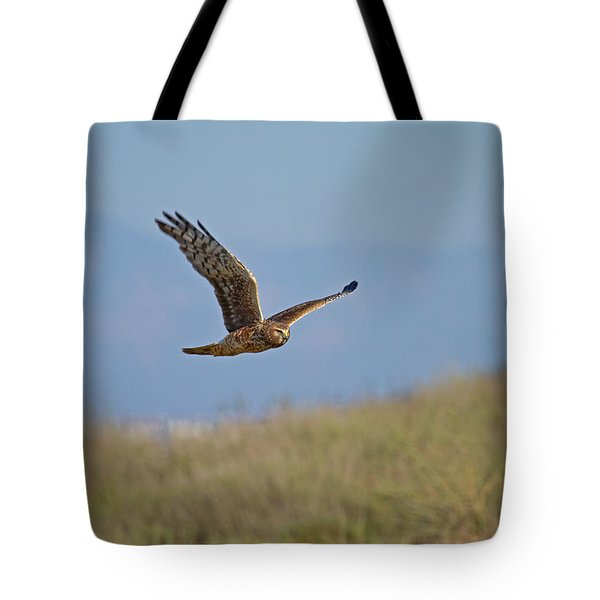 Northern Harrier In Flight Tote Bag