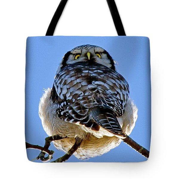 Northern Hawk Owl Looks Around Tote Bag