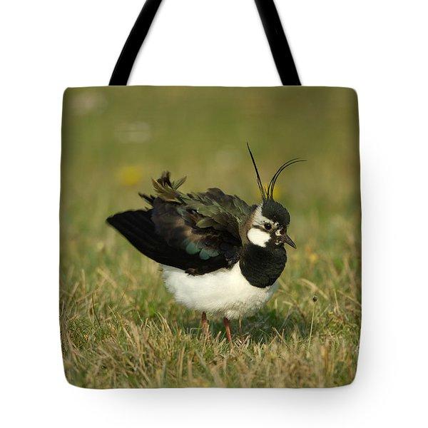 Northern Lapwing Tote Bag