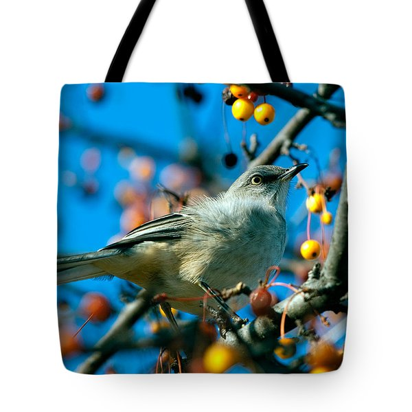 Northern Mockingbird Tote Bag by Bob Orsillo