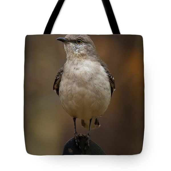 Northern Mockingbird Tote Bag by Robert L Jackson