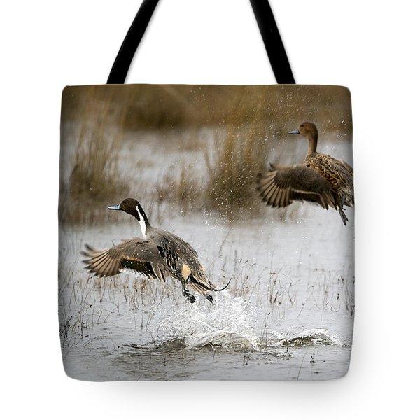 Northern Pintail Flight Tote Bag