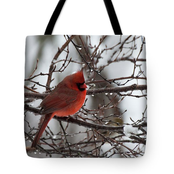 Tote Bag featuring the photograph Northern Red Cardinal In Winter by Jeff Folger