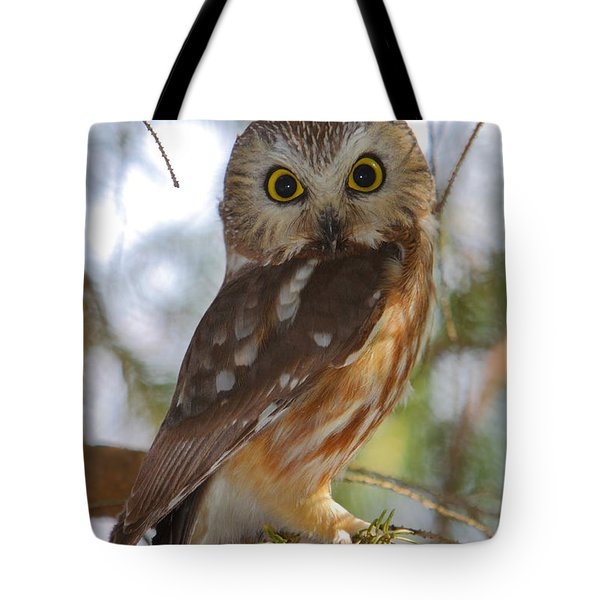 Northern Saw-whet Owl Tote Bag