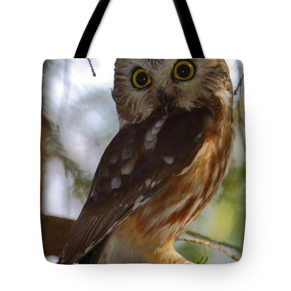 Northern Saw-whet Owl II Tote Bag