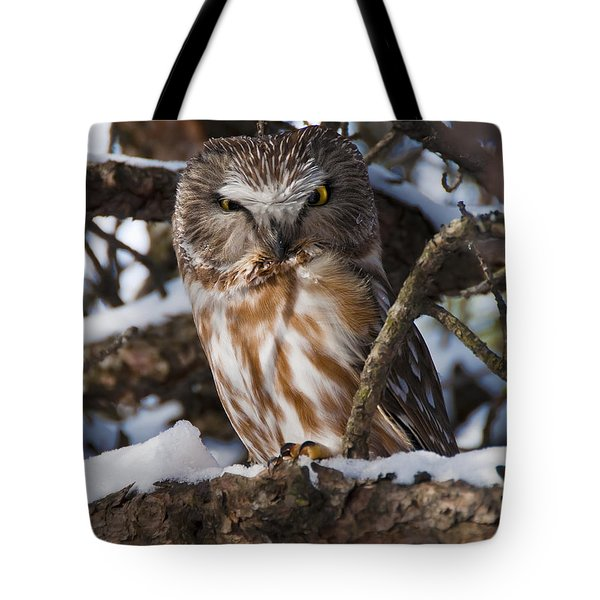 Northern Saw-whet Owl.. Tote Bag by Nina Stavlund