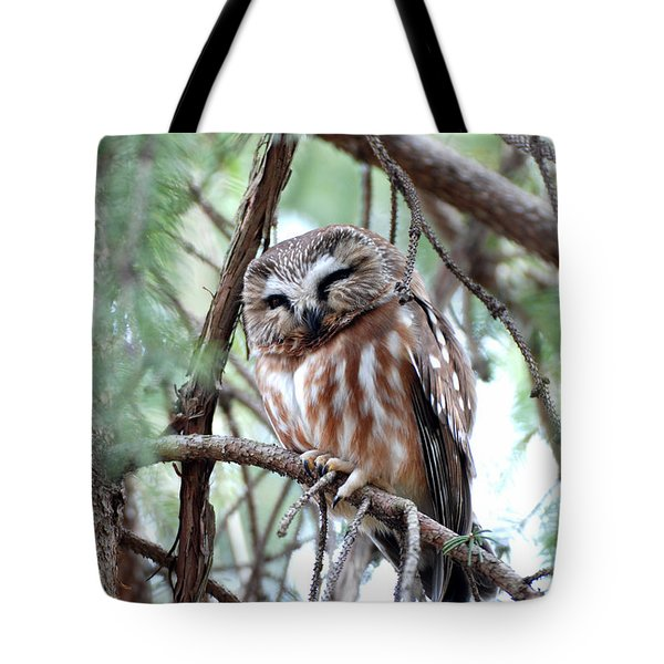 Northern Saw-whet Owl 2 Tote Bag