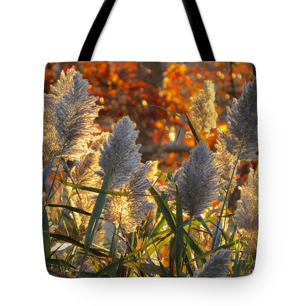 Tote Bag featuring the photograph November Lights by Dianne Cowen