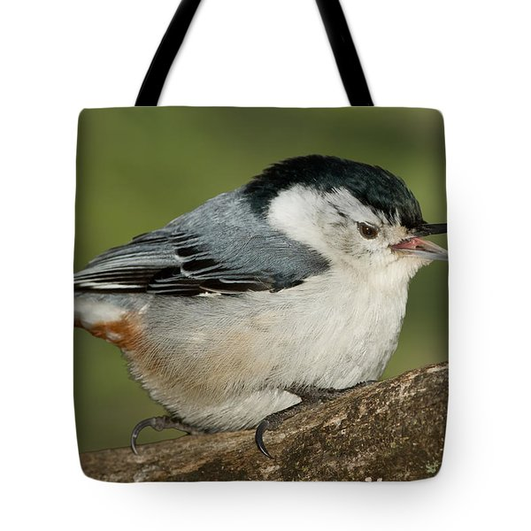 Nuthatch Tote Bag by Bill Wakeley