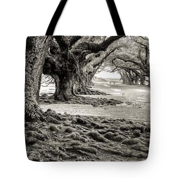Oak Alley Tote Bag by William Beuther