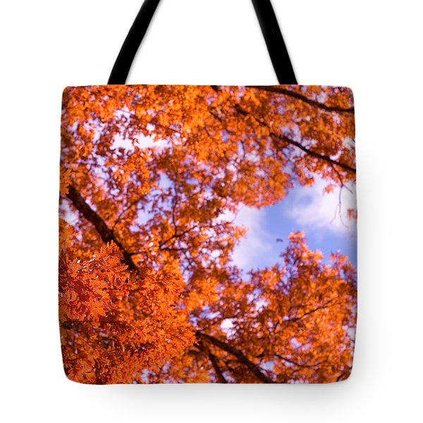 Oak In Evening Sun Tote Bag