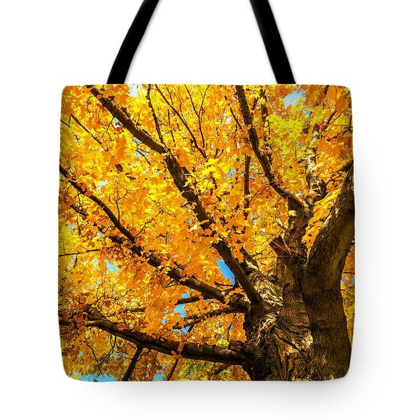 Oak In The Fall Tote Bag by Mike Ste Marie