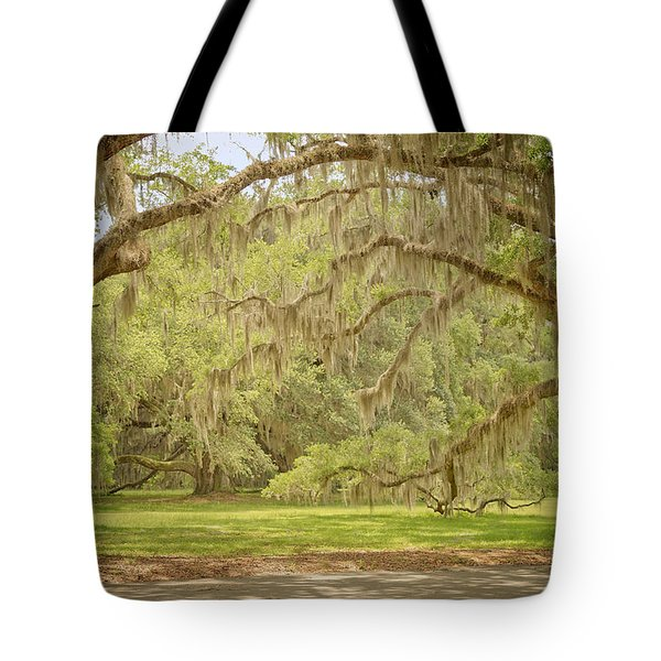 Oak Trees Draped With Spanish Moss Tote Bag by Kim Hojnacki