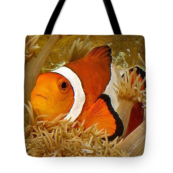 Ocellaris Clown Fish No 1 Tote Bag by Jerry Fornarotto