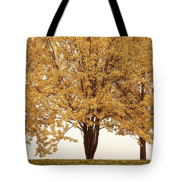 October Trees Tote Bag