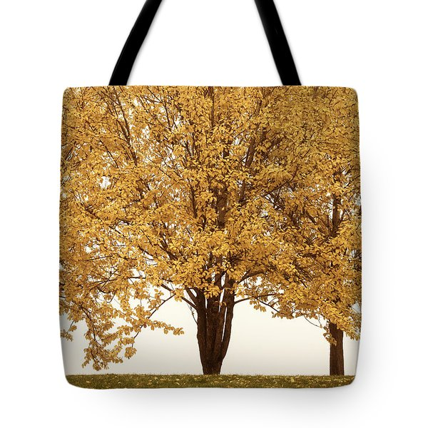 Tote Bag featuring the photograph October Trees by Ari Salmela
