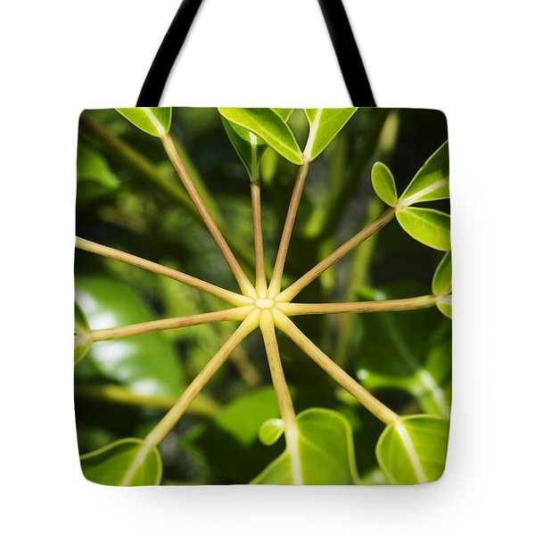 Octopus Tree Tote Bag by Charmian Vistaunet