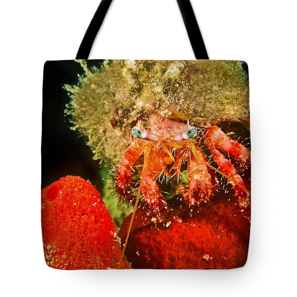 Oh Hello There Tote Bag