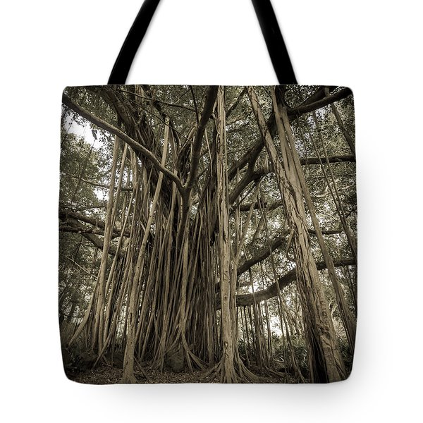 Old Banyan Tree Tote Bag by Adam Romanowicz