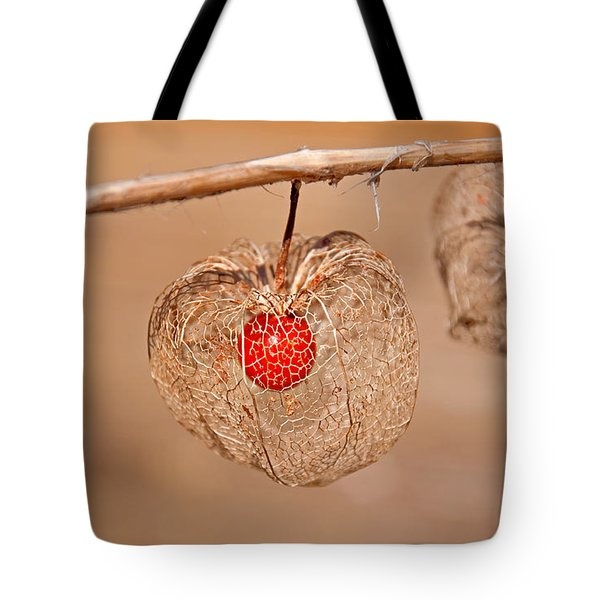 Old Chinese Lantern Pod Art Prints Tote Bag