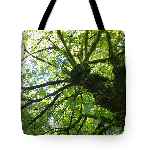 Old Growth Tree In Forest Tote Bag