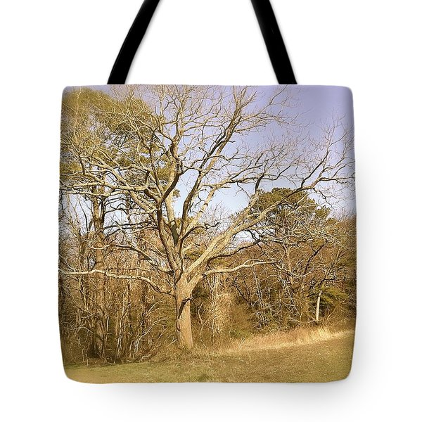 Tote Bag featuring the photograph Old Haunted Tree by Amazing Photographs AKA Christian Wilson