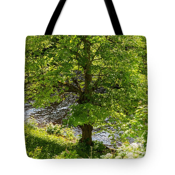 Old Small Leaved Lime At The Riverbank In Oravi Tote Bag