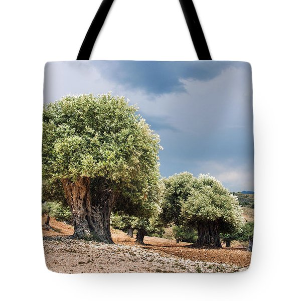 Olive Grove Tote Bag by Mike Santis