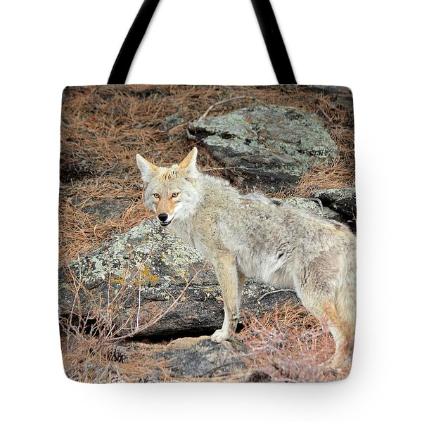 On The Prowl Tote Bag by Shane Bechler