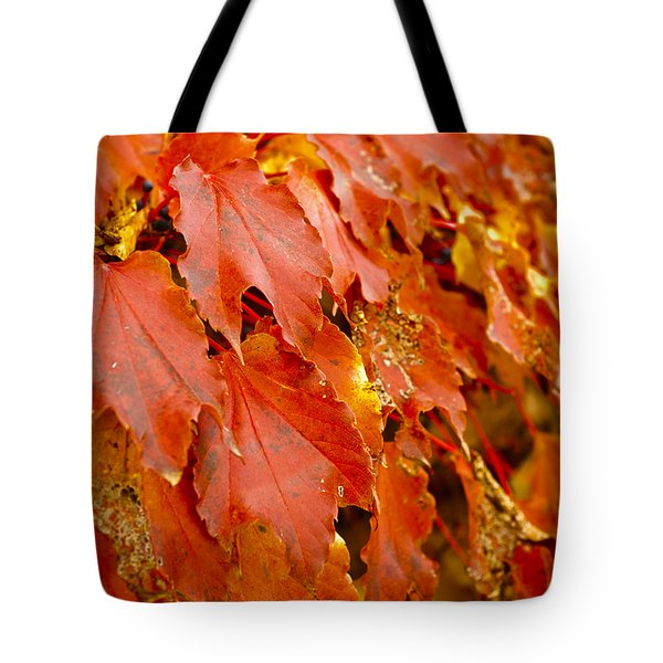 On The Wall Tote Bag by Christi Kraft
