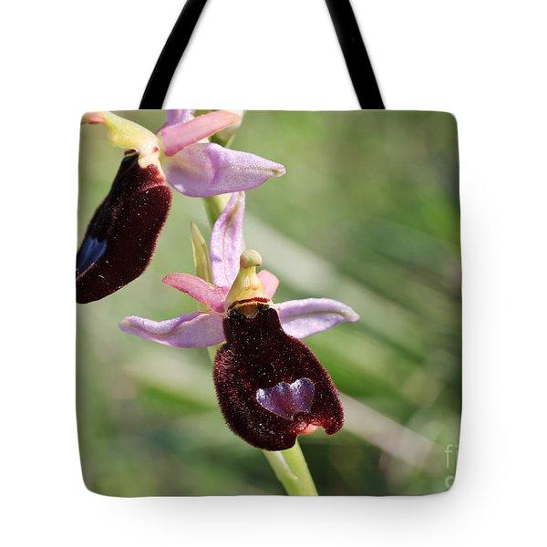 Ophrys Bertolonii Tote Bag by Antonio Scarpi