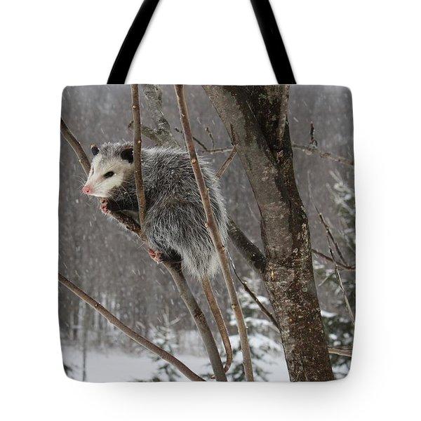 Opossum In A Tree Tote Bag
