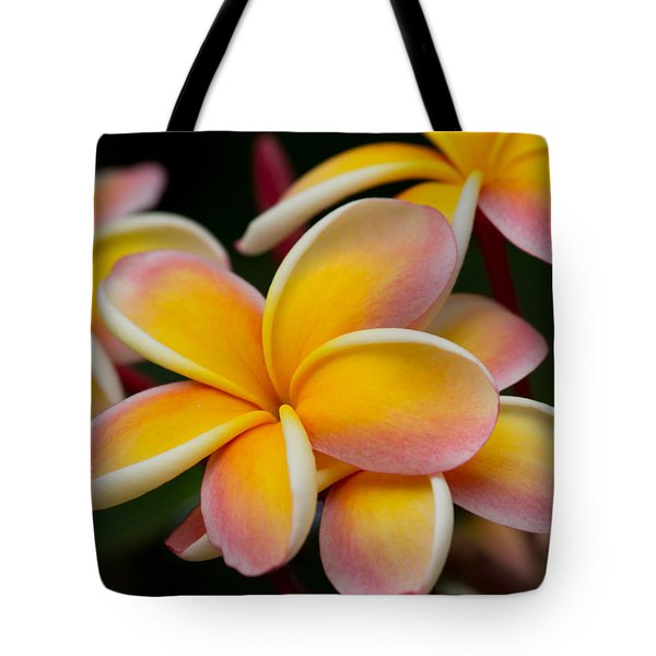 Orange And Pink Plumeria Tote Bag