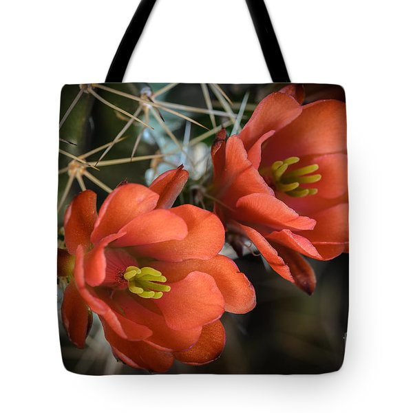 Orange Cactus Blooms Tote Bag