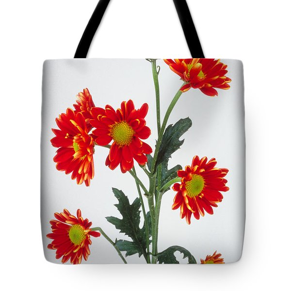 Orange Carnations Tote Bag