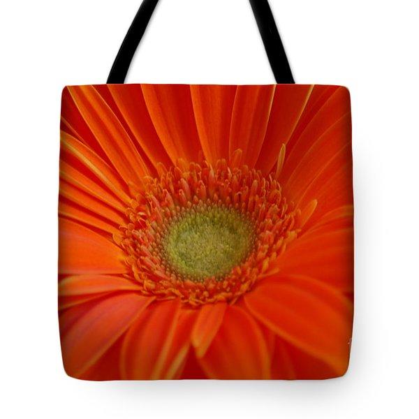 Orange Gerber Daisy Tote Bag