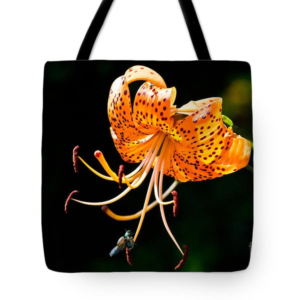Orange Lily - Lilium Kelleyanum Tote Bag