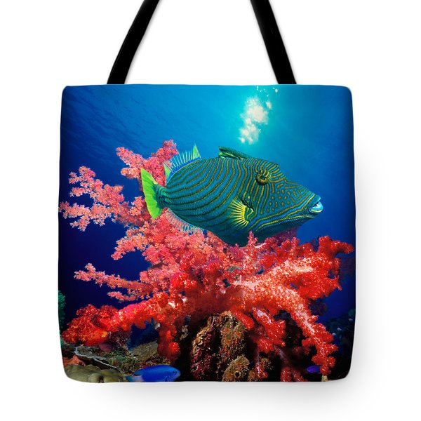 Orange-lined Triggerfish Balistapus Tote Bag