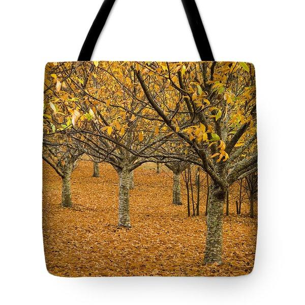 Orange Orchard Tote Bag by Tim Hester