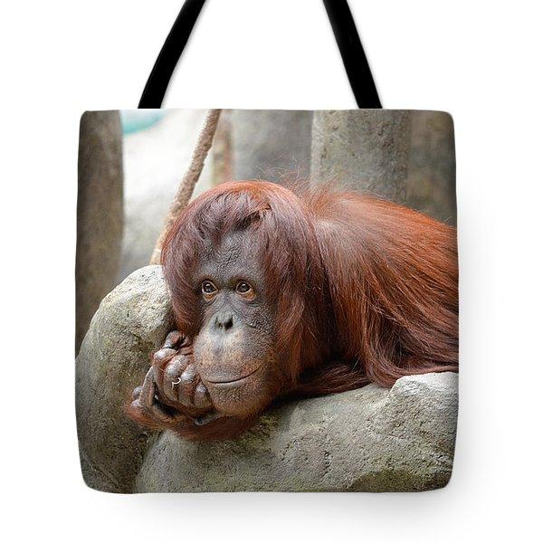 Orangutans Day Tote Bag