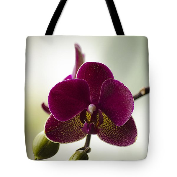 Orchid Tote Bag by Linsey Williams