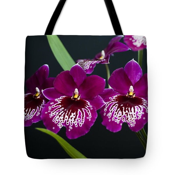 Tote Bag featuring the photograph Orchid Miltonia by Lana Enderle