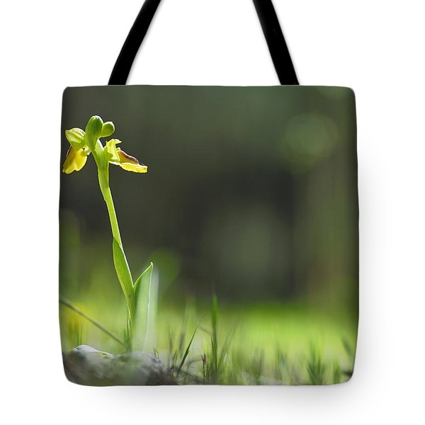 Orchids In The Forest Tote Bag by Guido Montanes Castillo