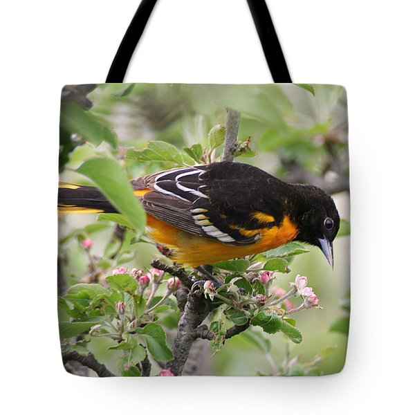 Oriole With Apple Blossoms Tote Bag
