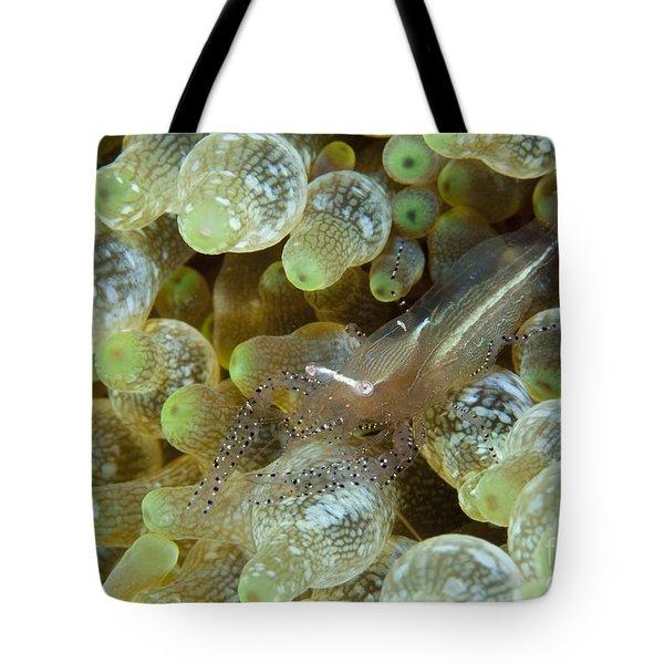 Ornate Anemone Shrimp In Anemone Tote Bag by Steve Jones